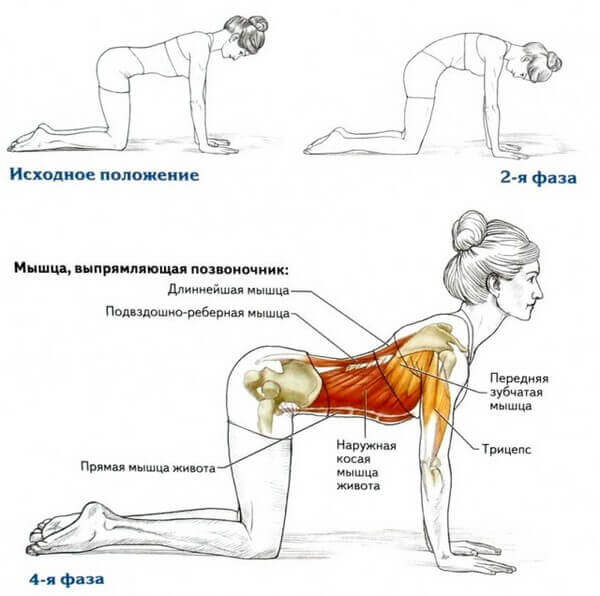 Упражнения для мышц спины кошка и верблюд