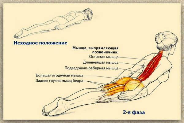 Упражнения для укрепления мышц спины из положения лежа