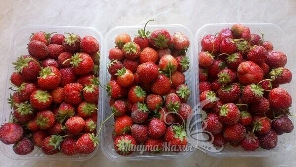 Собираем ягоду