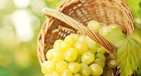 Виноград ГВ