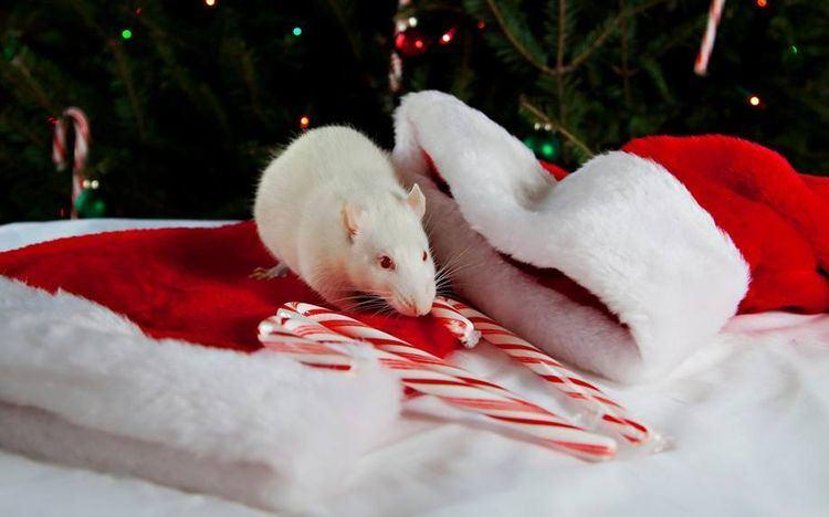 Год пройдет под символом Белой Металлической Крысы